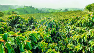 Photo of Report Shows Coffee Industry's Sustainability Agenda Largely Embellished