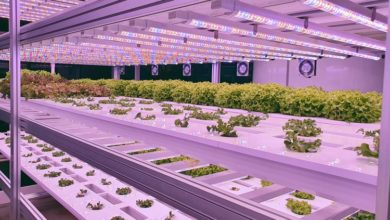 Photo of Indoor Farming Takes off With COVID-19 Food Shortages